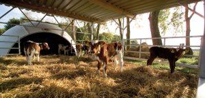 Brix TS Sensor – stabilní obsah sušiny v mléčné krmné směsi