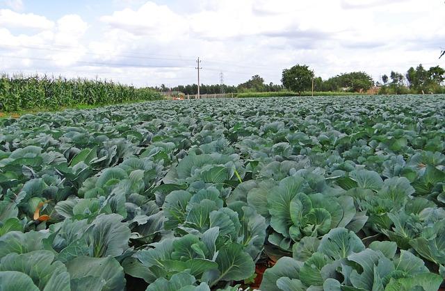 MZe: Na pultech obchodních řetězců končí 75 pct tuzemské zeleniny