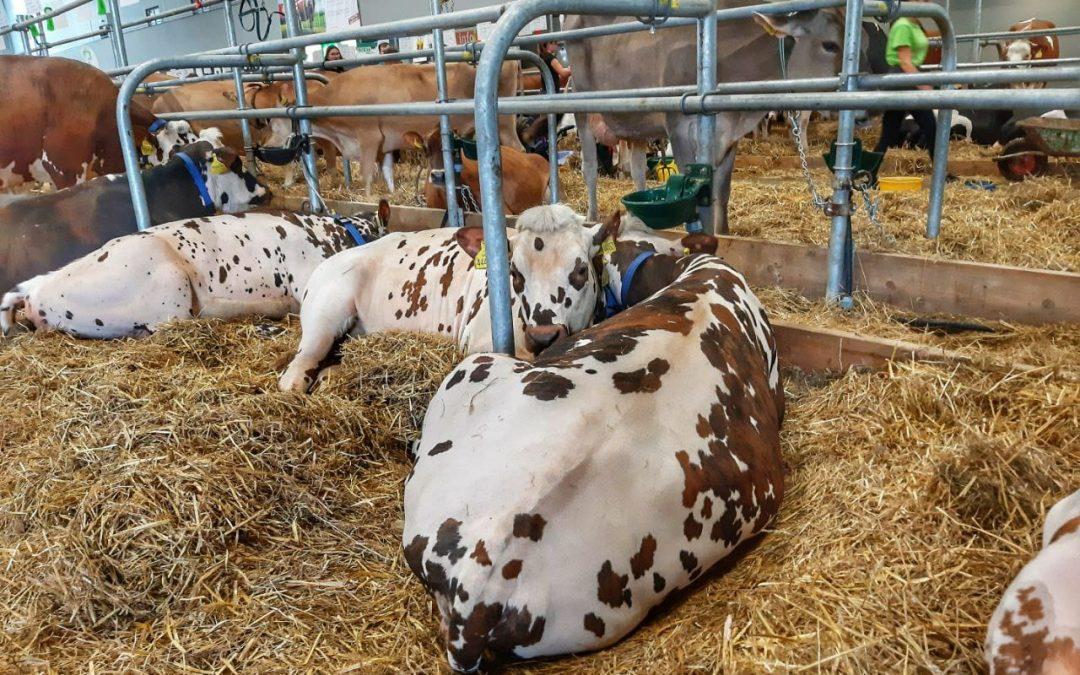 Veletrh Animal Tech a výstavu hospodářských zvířat navštívilo 20.000 lidí