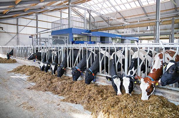 Co je dobré vědět o robotickém dojení? 4.část: Vliv robotického dojení na užitkovost krav